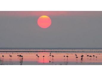 Kuruyan Seyfe Gölü Ile Ilgili Dsi'den Müjdeli Haber