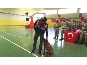 Korucuların Yemin Töreninde Jandarma Köpeklerinin Gösterisi Büyük Beğeni Topladı