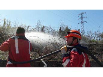 Arazi Yangını Büyümeden Kontrol Altına Alındı