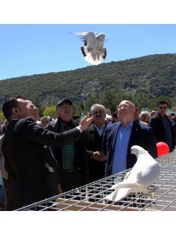 81 İlin Güvercin Severleri Muğla'da Festivalde Buluştu