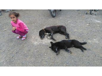 Ortaca'da Köpek Zehirlenmesi İddiası