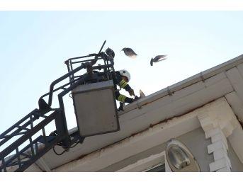 Çatıya Sıkışan Güvercini İtfaiye Kurtardı