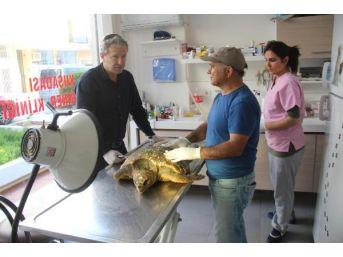 Kuşadası'nda 1 Günde Ölü 2 Deniz Kaplumbağası Bulundu