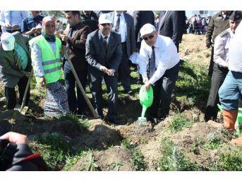 12 Dekarlık Arazide Kyk Ormanı Oluşturuldu