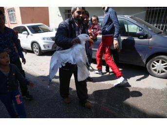 3 Gündür Çatıda Duran Martı Kurtarıldı