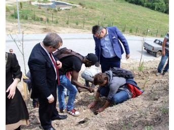 Edirne'de Uluslararası Öğrenciler Fidan Dikti