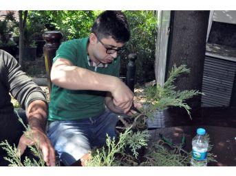 (özel Haber) Bonsai Sanatı İle Ağaçlara Şekil Verdiler