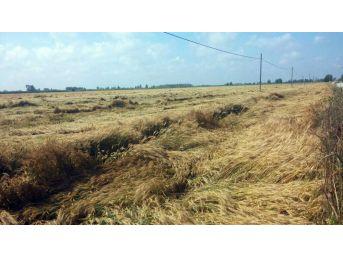 Dolu Ve Yağış Adana Çiftçisini Üzdü