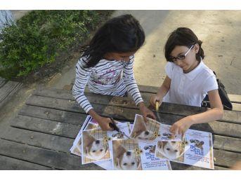 3 Kız Arkadaşın Hayvanlar İçin Yaptığı Afişler Takdir Topladı