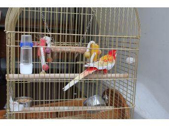 Galatasaray Adası'nın Papağanı