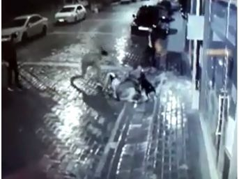 Manisa'da Köpeğe İşkence Yapan Şahıslar Yakalandı