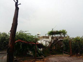 Fırtına Ağacı Devirdi, 4 Kişi Evde Mahsur Kaldı...