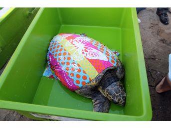 Dev Kaplumbağayı İyileştirip Denize Saldılar
