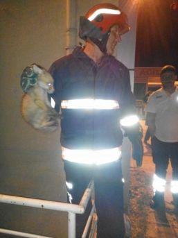 Hastanede Mahsur Kalan Yavru Tilkiyi İtfaiye Ekipleri Kurtardı