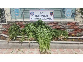 İzmir'de Uyuşturucu Operasyonu: 5 Gözaltı