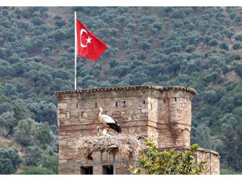 Aydın'da Leylek Sayımı Ve Halkalaması Yapıldı
