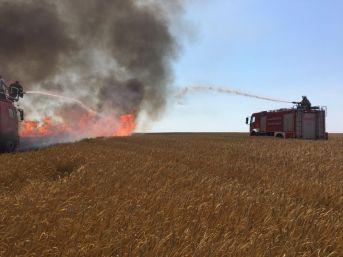 Bandırma'da Arazi Yangını