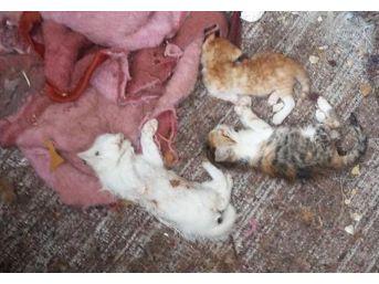 Uşak'ta 17 Kedi Parçalanmış Halde Bulundu