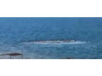 Denizde Korkutan Görüntü