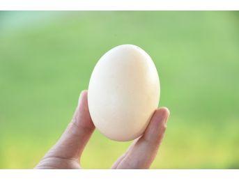 Yumurtadan Yumurta Çıktı