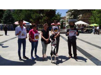 Tokat'ta, Hayvan Hakları Savunucularından Yasa Tasarısı Tepkisi