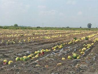 Ürünleri Sıcaktan Yanan Çiftçi Destek Bekliyor
