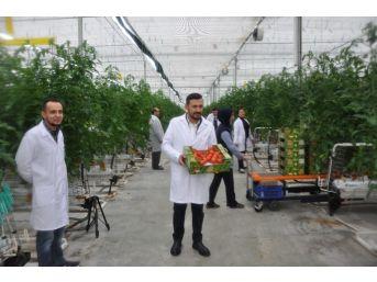Sandıklı'daki İyi Tarım Yapan Termal Seracılardan Prof. Dr. Canan Karatay'a Tepki