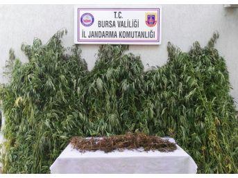 Sazlıklarda 330 Bin Liralık Uyuşturucu Ele Geçirildi