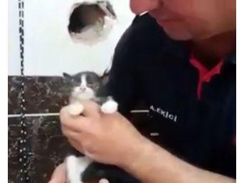 Yavru Kediyi Duvarı Delip Kurtardılar