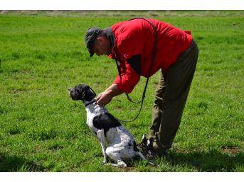 Av Köpeği Eğitimde Dikkat Edilmesi Gerekenler