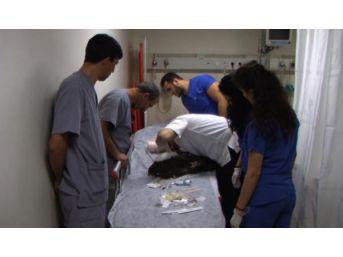 Yaralı Şahine Hastanede Müdahaleye Idari Soruşturma