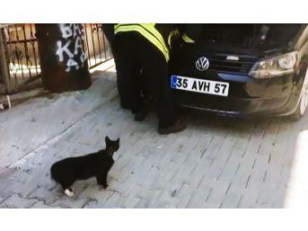 Anne Kedi, Yavrusu Kurtarılırken Başından Ayrılmadı