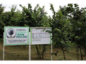 Ferrero Fındık Yetkilileri Üretici İle Bir Araya Gelerek Bahçe Günleri Yapıyor
