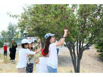 Keçiörenli Çocuklar Yaz Kampında Hem Eğleniyor Hem Öğreniyor