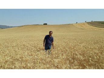 Belediye Vatandaşlar İçin Buğday Ekti