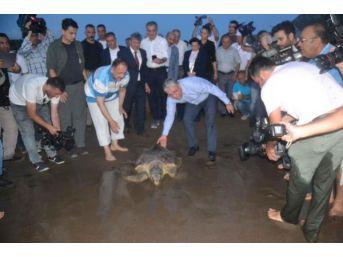 Bakan Özhaseki, Tedavi Edilen Kaplumbağaları Denize Bıraktı...