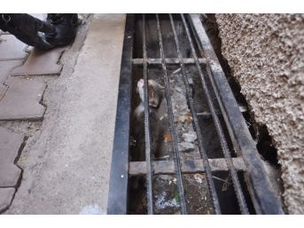 Apartmanın Gider Mazgallarında Mahsur Kalan Kediyi İtfaiye Kurtardı