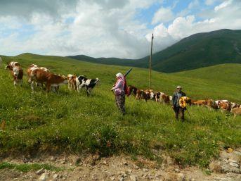 Posof'ta Çoban Bulamıyorlar