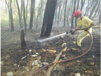 Kazdağları'ndaki Ormanı Yangının Kundakçısı Yakalandı