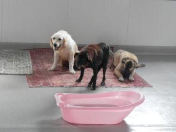Kaza, Maganda Kurşunu Kurbanı 12 Köpek 'engellenenler Evi'nde