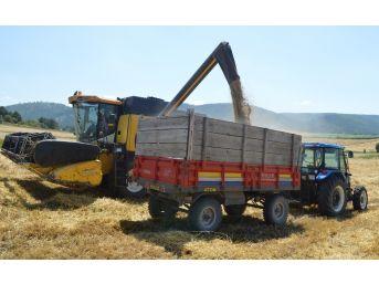 Buğdayın Atası 'siyez'in Hasadı Devam Ediyor
