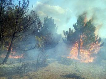 Kastamonu'da Ormanlık Alanda Yangın