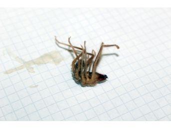 Niğde'de Sarıkız Örümceği Kabusu