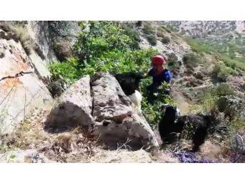 Uçurumun Kenarında 72 Saat Mahsur Kalan Keçileri Afad Kurtardı