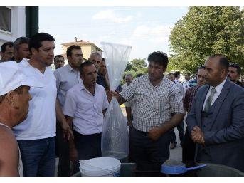 Afyonkarahisar'da Göl Ve Göletlere 535 Bin Adet Balık Bırakıldı