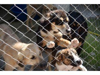 Sokak Hayvanları Ve Yaban Hayvanlarına Özel Barınak