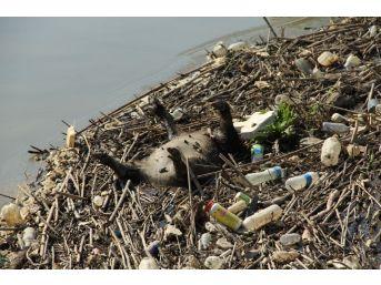 Uzmanlar, Büyük Menderes Nehri'ndeki Tehlikeye Dikkat Çektiler