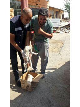 Bingöl'de Bitkin Bulunan 2 Yavru Köpek Koruma Altına Alındı