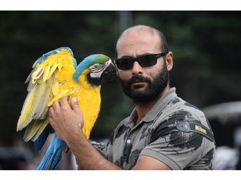 (özel Haber) Papağanla Fotoğraf Çekilmek İçin Sıraya Girdiler