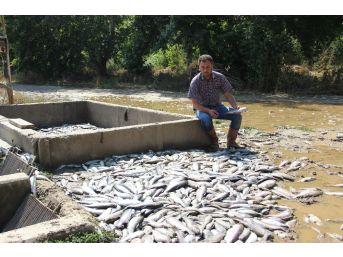 Sel Felaketinde Yüz Binlerce Balık Telef Oldu